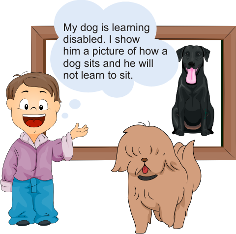 Learning Disabled Dog